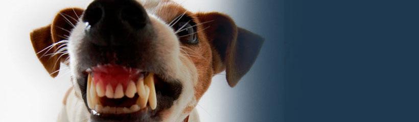 Temecula Dog Bite Lawyer